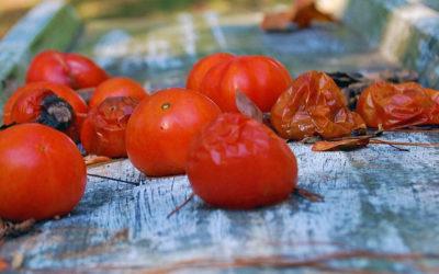 Rotten Tomates: il sito che stronca tutti i film!