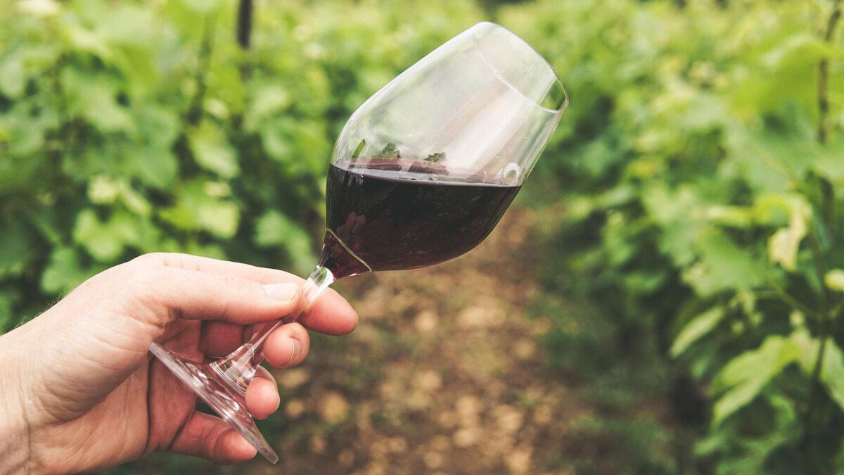 In Vino Curiositas: curiosità (che forse non sai) sul mondo del vino