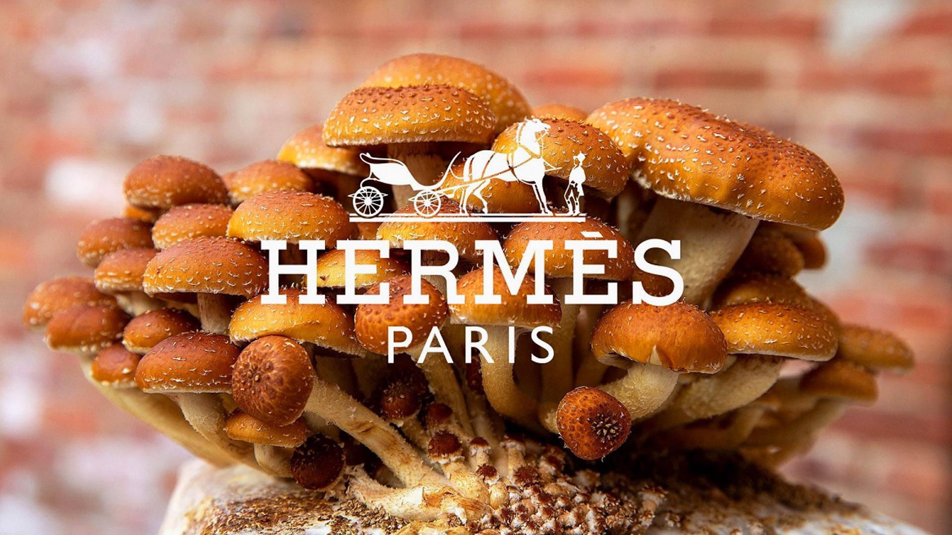 Ecopelle ricavata dai funghi: Stella McCartney ed Hermes in prima linea